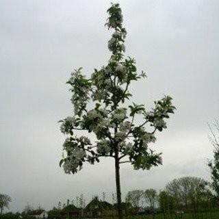 Bomen-online-bestellen-boomkwekerij